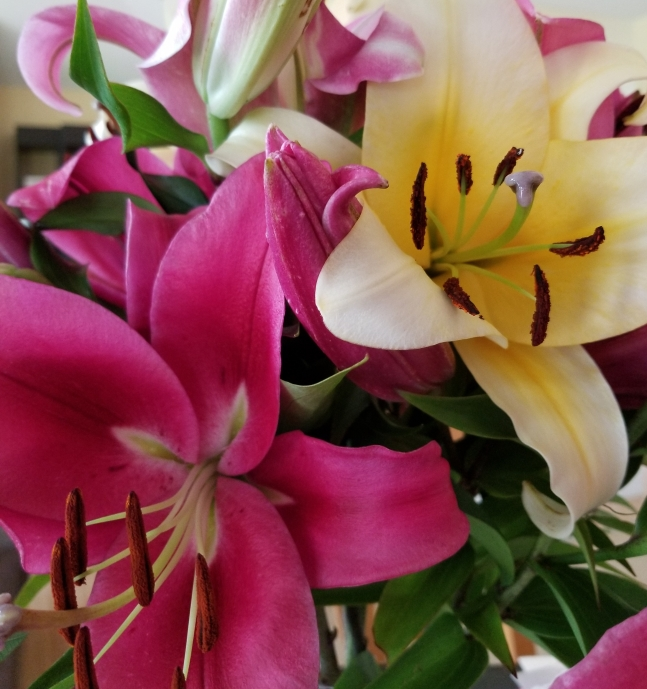 flowers_lilly1