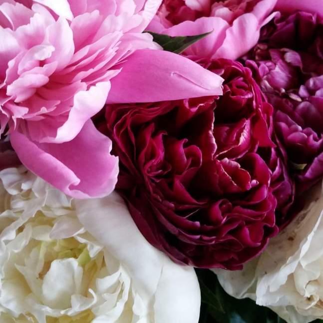 flowers_peonies1